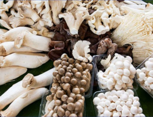 Healthy News: Mushrooms [Fall 2019 Newsletter]